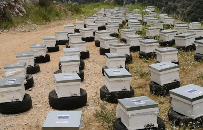 وزارة الزراعة لتحييد قفران النحل عن مكافحة الجراد