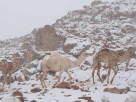 الثلوج تكسو تبوك شمالي السعودية