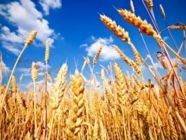 نقابة القمح والحبوب تهنئ وزير الزراعة عباس مرتضى