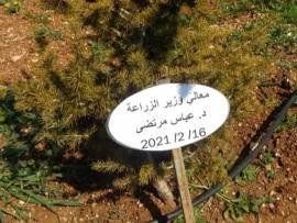 أرزة في تل عمارة باسم الوزير مرتضى