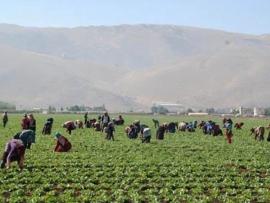 ارشادات الى المزارعين  من مصلحة الابحاث العلمية حول الطقس