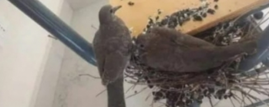 طيور تستغل اضراب الجامعة